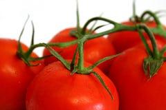 φρέσκο λευκό tomates ανασκόπησ&et Στοκ εικόνα με δικαίωμα ελεύθερης χρήσης