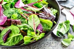 Φρέσκο μίγμα σαλάτας του σπανακιού μωρών, των φύλλων arugula, του βασιλικού, chard και του μαρουλιού αρνιών Στοκ Εικόνα