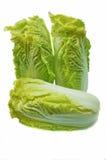 Φρέσκο μαρούλι Romaine Στοκ Φωτογραφίες