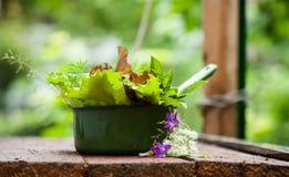 Φρέσκο μαρούλι στον κήπο Στοκ φωτογραφία με δικαίωμα ελεύθερης χρήσης