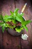 Φρέσκο μαρούλι στον κήπο Στοκ εικόνα με δικαίωμα ελεύθερης χρήσης