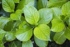 Φρέσκο να φανεί πράσινο βγάζει φύλλα Στοκ φωτογραφία με δικαίωμα ελεύθερης χρήσης