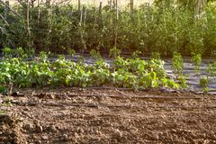 Φρέσκο οργανικό μικτό υπόβαθρο φυτικών κήπων Στοκ εικόνα με δικαίωμα ελεύθερης χρήσης
