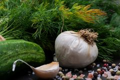Φρέσκο οργανικό σκόρδο, αγγούρι, άνηθος, χονδροειδής θάλασσα και ρόδινο άλας Himalayan, Peppercorns ουράνιων τόξων στο σκοτάδι στοκ εικόνα