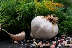Φρέσκο οργανικό σκόρδο, αγγούρι, άνηθος, χονδροειδής θάλασσα και ρόδινο άλας Himalayan, Peppercorns ουράνιων τόξων στο σκοτάδι στοκ φωτογραφία