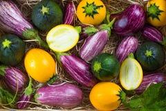 Φρέσκο οργανικό υπόβαθρο λαχανικών, ταπετσαρία - στρογγυλό κολοκύθι Στοκ φωτογραφία με δικαίωμα ελεύθερης χρήσης