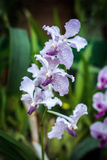 Φρέσκο λουλούδι ορχιδεών Στοκ Φωτογραφίες