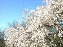 Φρέσκο πάρκο λουλουδιών Στοκ φωτογραφία με δικαίωμα ελεύθερης χρήσης