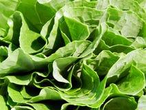 Φρέσκο πακέτο του Kale Στοκ εικόνες με δικαίωμα ελεύθερης χρήσης