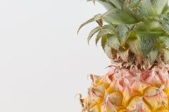 φρέσκο πεύκο μήλων Στοκ φωτογραφίες με δικαίωμα ελεύθερης χρήσης