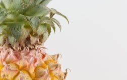 φρέσκο πεύκο μήλων Στοκ εικόνες με δικαίωμα ελεύθερης χρήσης