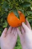 φρέσκο πορτοκάλι Στοκ εικόνα με δικαίωμα ελεύθερης χρήσης