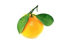 Φρέσκο πορτοκαλί μανταρίνι Στοκ εικόνα με δικαίωμα ελεύθερης χρήσης