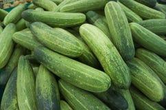 Φρέσκο πράσινο αγγούρι Στοκ εικόνες με δικαίωμα ελεύθερης χρήσης
