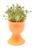 Φρέσκο πράσινο κάρδαμο στο πορτοκαλί φλυτζάνι Άσπρη ανασκόπηση Στοκ Εικόνα