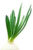 φρέσκο πράσινο κρεμμύδι στοκ εικόνα