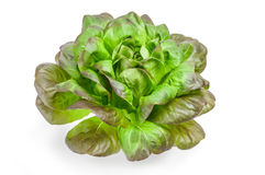 Φρέσκο πράσινο μαρούλι στο άσπρο υπόβαθρο, έννοια τροφίμων Στοκ φωτογραφίες με δικαίωμα ελεύθερης χρήσης