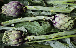 Φρέσκο πράσινο νόστιμο artichok που βράζεται που προετοιμάζεται για το μαγείρεμα, horizont Στοκ Φωτογραφία