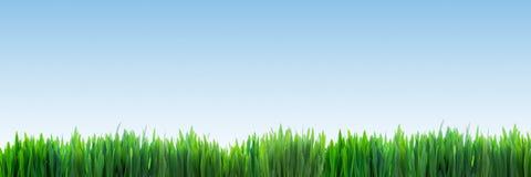 Φρέσκο πράσινο πανόραμα χλόης στο σαφές υπόβαθρο μπλε ουρανού Στοκ Φωτογραφία