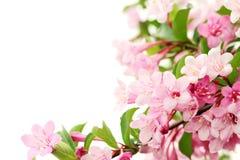 φρέσκο πράσινο ροζ φύλλων &la Στοκ φωτογραφίες με δικαίωμα ελεύθερης χρήσης