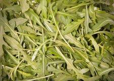 Φρέσκο πράσινο arugula για το πράσινο φυσικό υπόβαθρο τονισμένος Στοκ φωτογραφία με δικαίωμα ελεύθερης χρήσης