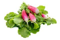 Φρέσκο ραδίκι στα πράσινα φύλλα σαλάτας μαρουλιού Στοκ φωτογραφία με δικαίωμα ελεύθερης χρήσης