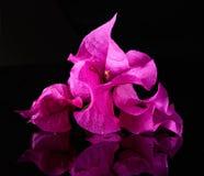 φρέσκο ροζ λουλουδιών Στοκ φωτογραφία με δικαίωμα ελεύθερης χρήσης