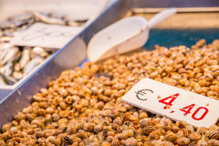 Φρέσκο σαλιγκάρι γυμνοσαλιάγκων στη Βενετία fishmarket στη Βενετία, Ιταλία Στοκ Φωτογραφίες