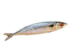 Φρέσκο σκουμπρί ψαριών σε ένα άσπρο υπόβαθρο, που απομονώνεται NZ στοκ εικόνες