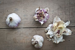 φρέσκο σκόρδο βολβών Στοκ φωτογραφία με δικαίωμα ελεύθερης χρήσης