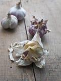 φρέσκο σκόρδο βολβών Στοκ εικόνα με δικαίωμα ελεύθερης χρήσης