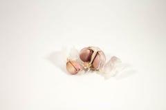 Φρέσκο σκόρδο σε μια άσπρη ανασκόπηση Στοκ Εικόνες