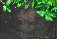 Φρέσκο σπανάκι στο σκοτεινό εκλεκτής ποιότητας υπόβαθρο των παλαιών σκουριασμένων μετάλλων Υγιή τρόφιμα vegan ή έννοια διατροφής  στοκ φωτογραφίες