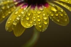 Φρέσκο στάλαγμα λουλουδιών ανοίξεων υγρό με τη φρεσκάδα στοκ φωτογραφίες