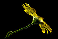 Φρέσκο στάλαγμα λουλουδιών ανοίξεων υγρό με τη φρεσκάδα στοκ φωτογραφίες με δικαίωμα ελεύθερης χρήσης