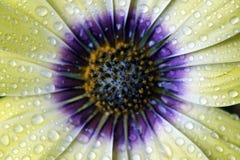 Φρέσκο στάλαγμα λουλουδιών ανοίξεων υγρό με τη φρεσκάδα στοκ φωτογραφία