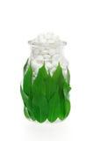 φρέσκο συμπλήρωμα χαπιών φύλλων γυαλιού βοτανικό Στοκ Φωτογραφία