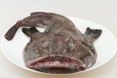 φρέσκο σύνολο monkfish Στοκ Εικόνες