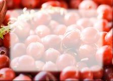 Φρέσκο το βακκίνιο, στενή άποψη Στοκ φωτογραφία με δικαίωμα ελεύθερης χρήσης