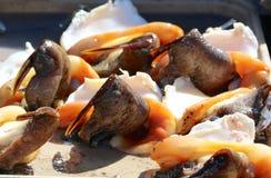 Φρέσκο των Μπαχάμας conch Ceviche στοκ εικόνες