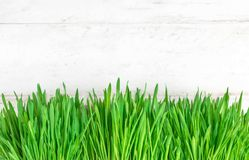 Φρέσκο υπόβαθρο άνοιξη με τη φρέσκια πράσινη σειρά χλόης στο άσπρο ξύλο Στοκ Φωτογραφία