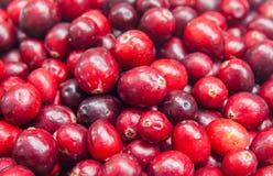 Φρέσκο υπόβαθρο φρούτων τροφίμων των βακκίνιων έξοχο Στοκ εικόνες με δικαίωμα ελεύθερης χρήσης