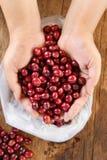 Φρέσκο φασόλι καφέ υπό εξέταση στον κόκκινο καφέ μούρων Στοκ Φωτογραφίες