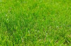 Φρέσκο φυσικό πράσινο λιβάδι χλόης που τακτοποιείται ακόμη και Στοκ φωτογραφία με δικαίωμα ελεύθερης χρήσης
