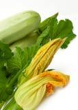 Φρέσκο φυτικό κολοκύθι με το πράσινο φύλλο Στοκ Εικόνα