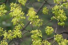 φρέσκο φυτό Στοκ φωτογραφία με δικαίωμα ελεύθερης χρήσης