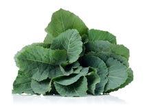 Φρέσκο φύλλο πράσινων λάχανων στοκ εικόνες