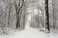 Φρέσκο χιόνι στοκ εικόνες με δικαίωμα ελεύθερης χρήσης