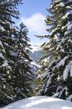 φρέσκο χιόνι Στοκ Φωτογραφίες