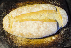 Φρέσκο ψημένο ψωμί Feench Στοκ Εικόνες
